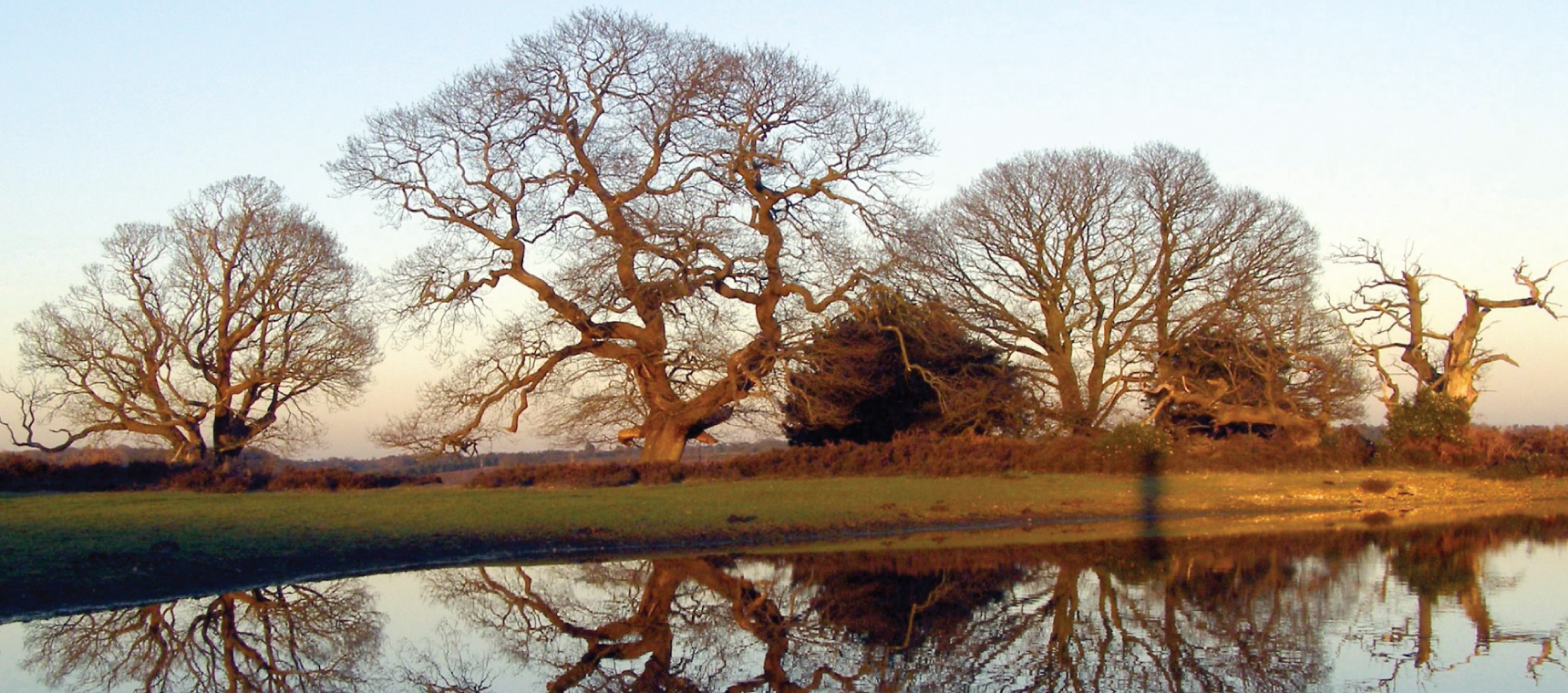 Winter oak reflections 02 https://www.flickr.com/photos/treehouse1977/378863673 by Jim Champion. Licensed for reuse under this Creative Commons Licence https://creativecommons.org/licenses/by-sa/2.0/